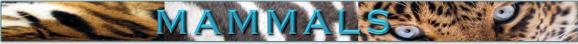 mammalslbl