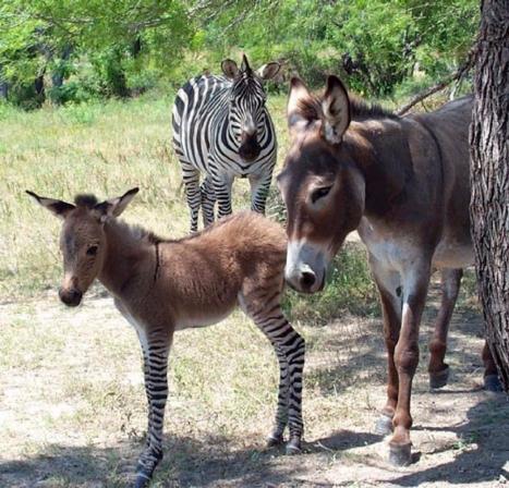 zonkeyfamily