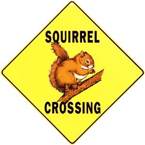 squirrelxing