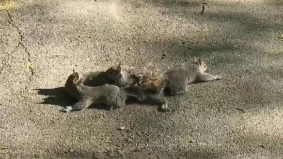 tangledsquirrels